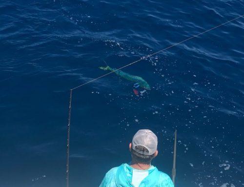 Florida April Mahi Fishing