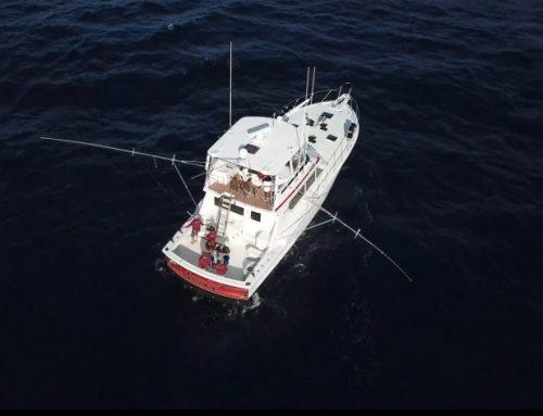 Stuart Florida Marlin Fishing